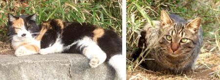 mitsuike_cat