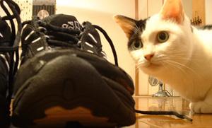 06shoes.jpg