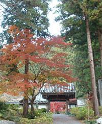 25red_leaves.jpg