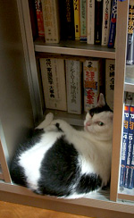 31ushi_shelf
