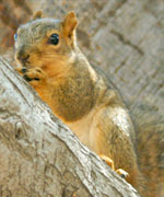 0615squirrel