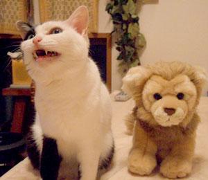 03uhisko_lion