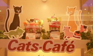 070628catscafe