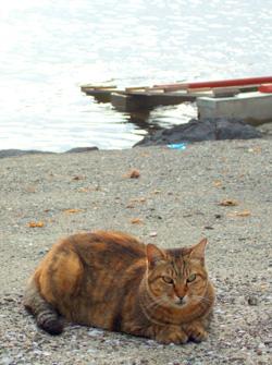 0916arasaki_cat